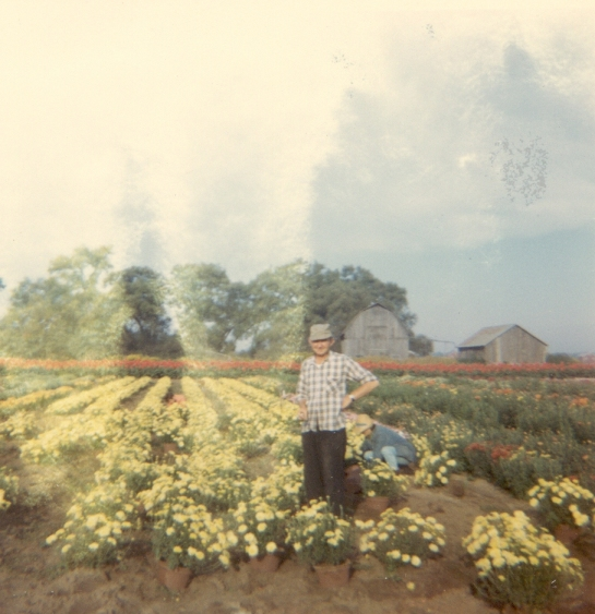 1960s-gerrit-mcconnells-nursery-in-canada-cropped